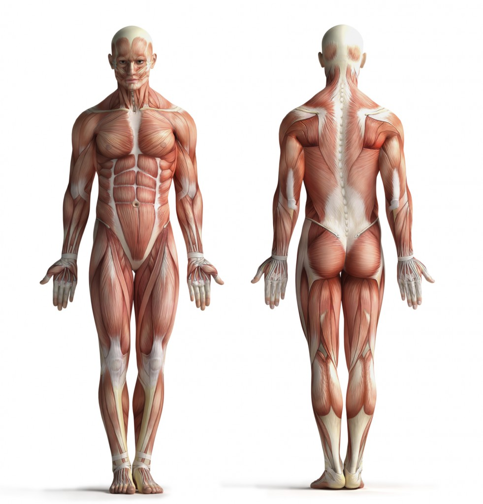 Was ist Functional Myofascial Training? - sofimo.de