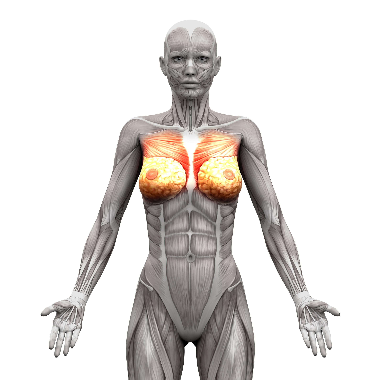 Brustmuskeltraining für Frauen: Funktion, Nutzen und Übungen - sofimo.de