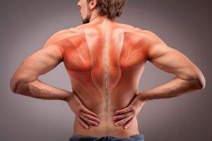 Rücken mit sichtbaren Muskeln