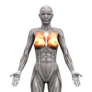 Aufbau der Brustmukulatur Frau