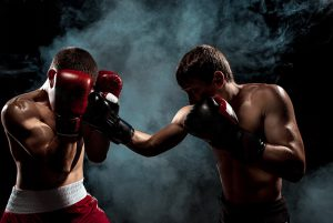 boxer boxverband kampf