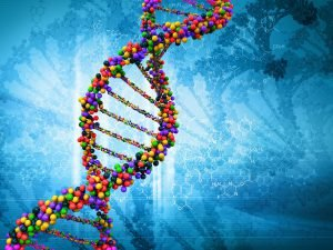 gute und schlechte Gene